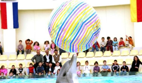 Aqua Club Dolphin Su Parkı